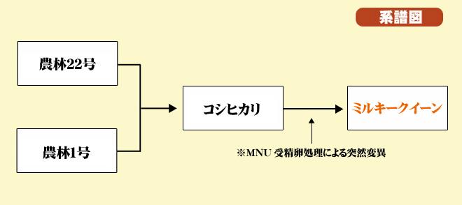ミルキークイーン系譜図