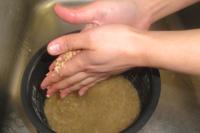 手のひらでこすり合わせるようにやさしくもみ洗いします