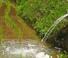 田んぼに流れ込む水
