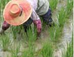 無農薬栽培の苦労点