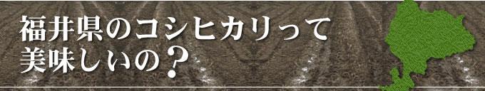 福井県のコシヒカリって美味しいの?