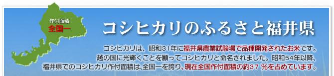 コシヒカリのふるさと福井県