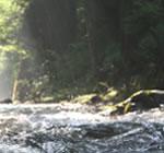 九頭竜川の清らかな水