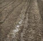 自然や微生物の恩恵を最大限に利用した土壌