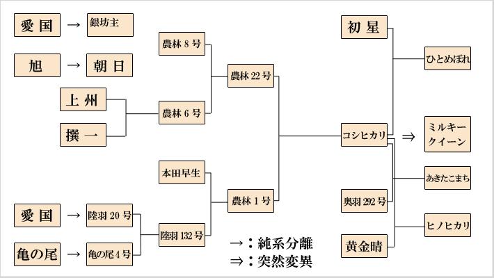 ミルキクイーンの系統図