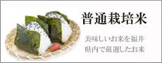 普通栽培米