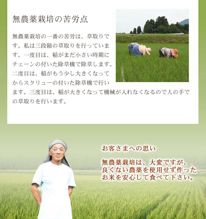 無農薬米コシヒカリ極のこだわり3