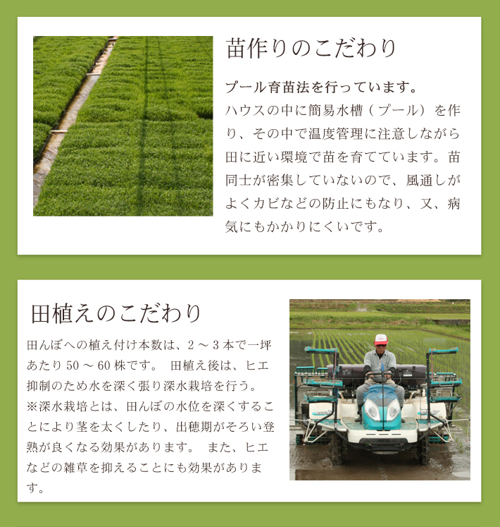 無農薬米コシヒカリ極のこだわり2