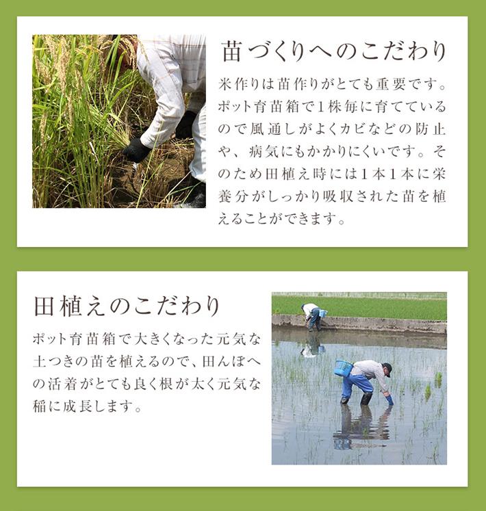 無農薬米へのこだわり2