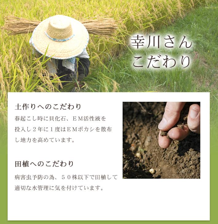 無農薬米コシヒカリプレミアム