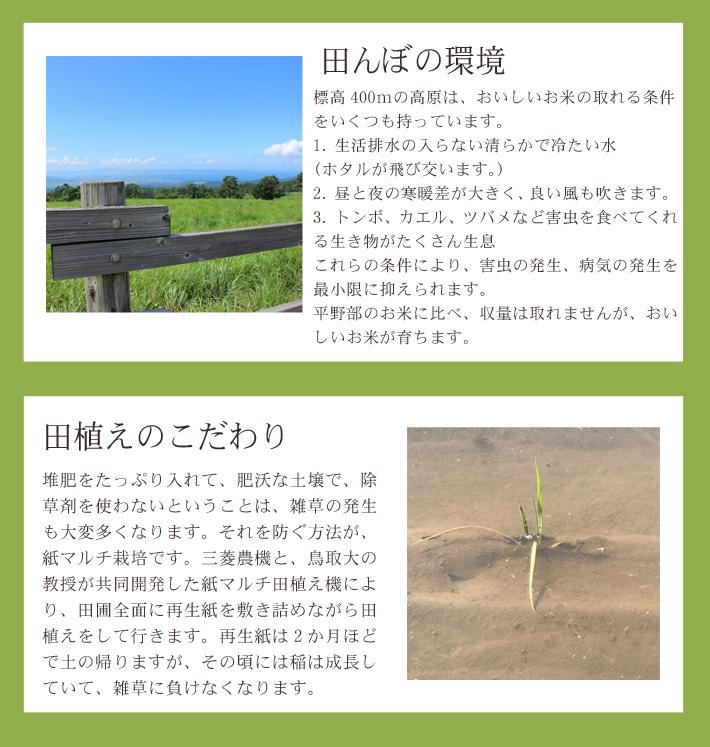 発芽玄米 無農薬 ミルキークイーン 4