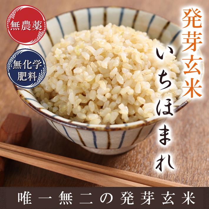 発芽玄米 いちほまれ