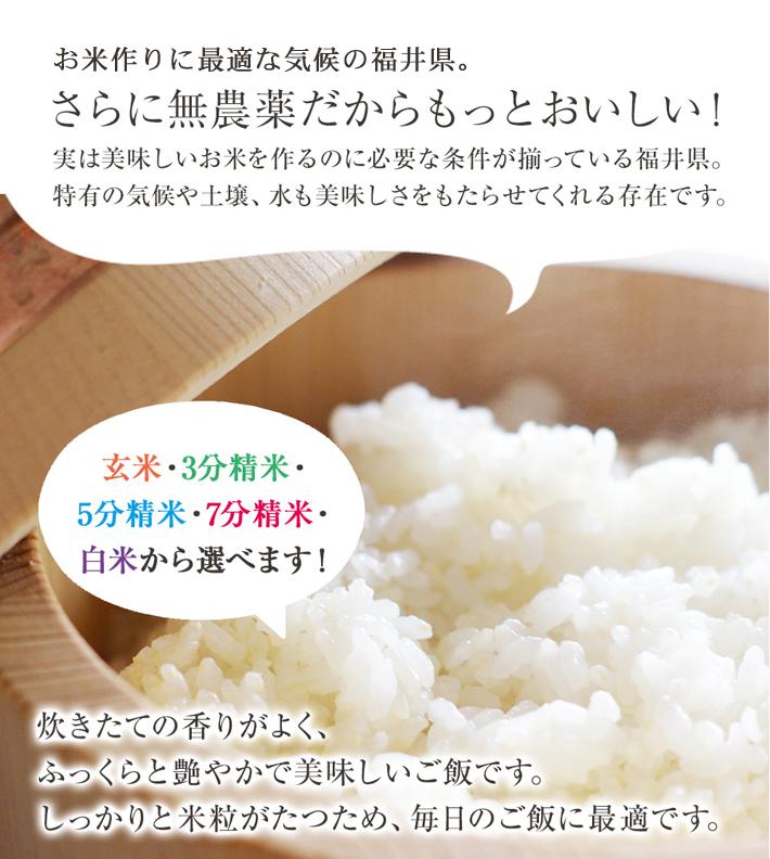 お米の美味しい福井県