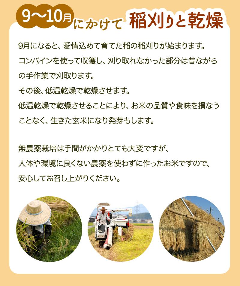 稲を育てる