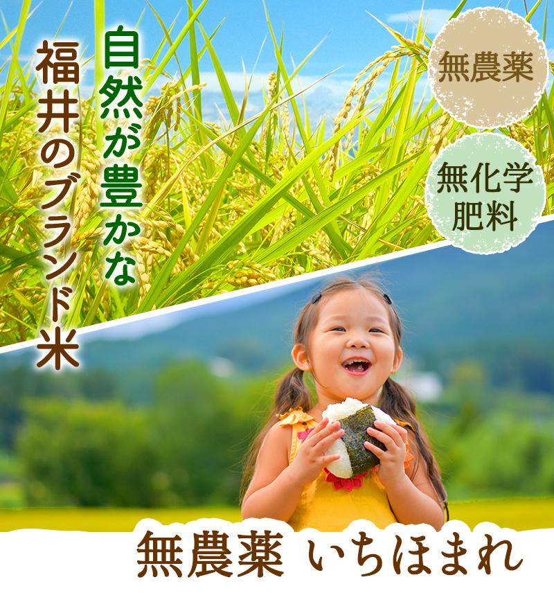 福井のブランド米