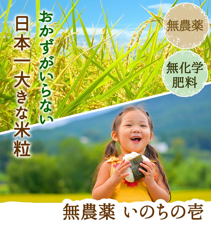 おかずがいらない日本一大きな米粒