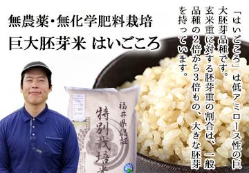 発芽玄米 無農薬 コシヒカリ はいごころ