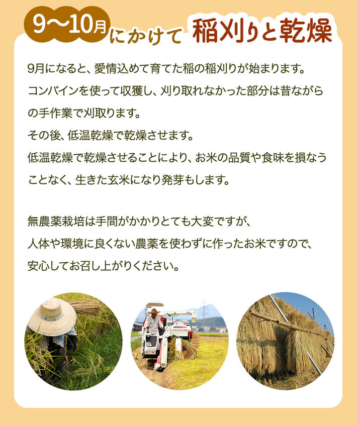 9~10月にかけて稲刈りと乾燥