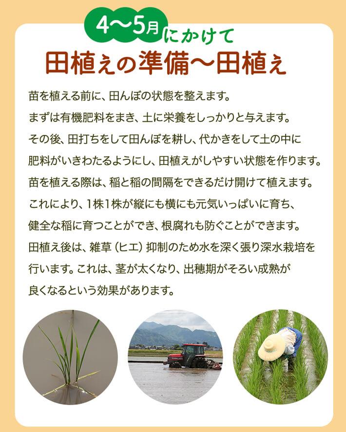 4~5月にかけて田植えの準備~田植え