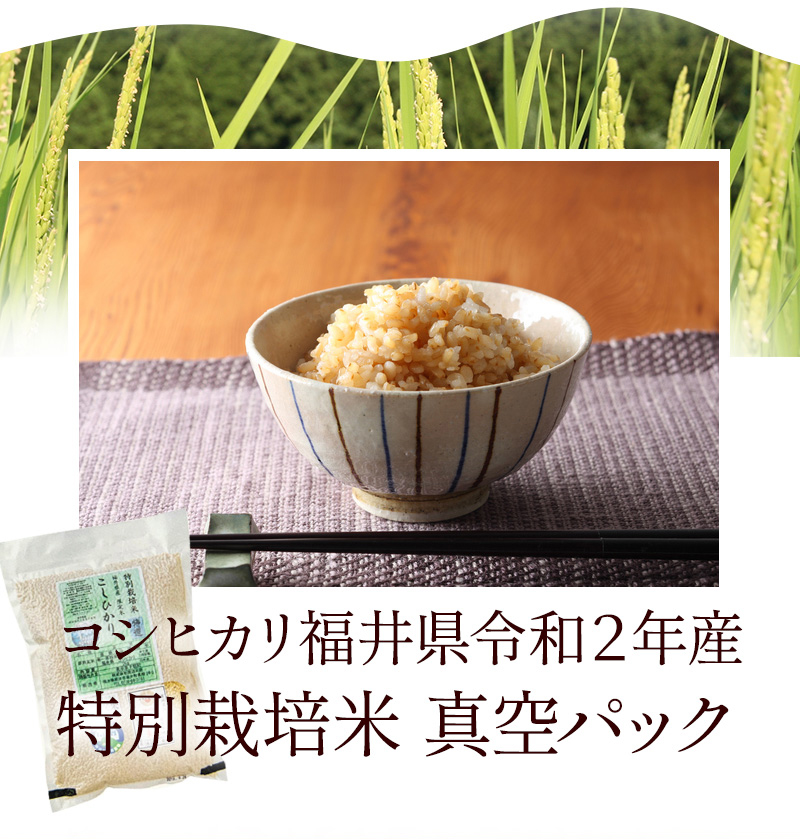 発芽玄米 コシヒカリ